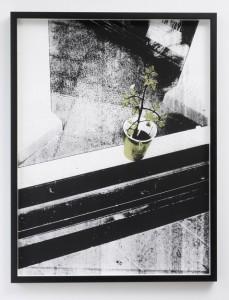 Plant beyond the window Shan Hur, Digital silk print, framed 60 x 80 cm, 2012