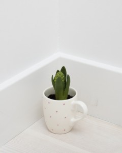 Shan Hur, Hyacinth in the Cup, 2012,Bronze, cup, soil 8 cm x 10 cm x 20 cm