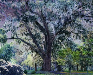 Aziz and Cucher: Scenapse 3 (Spanish Moss), C-print on Endura Metallic paper with Diasec mount, 101.5x124.5 cm, 2007