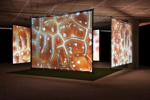 Aziz and Cucher: Synaptic Bliss: Villette, 4-channel video installation with surround sound, 16' loop, dimensions variable, 2004
