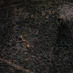 gazelliarthouse_main_alinka_echeverria_ash-from-cradle-series_2016