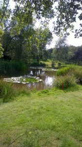 Golf Course Lilly Pond