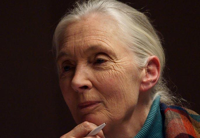 Dr Jane Goodall Dbe Hero Image