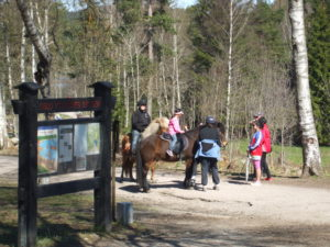 Ponies at Sognsvann