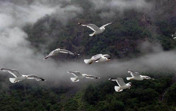 Birds on the Nærøyfjord