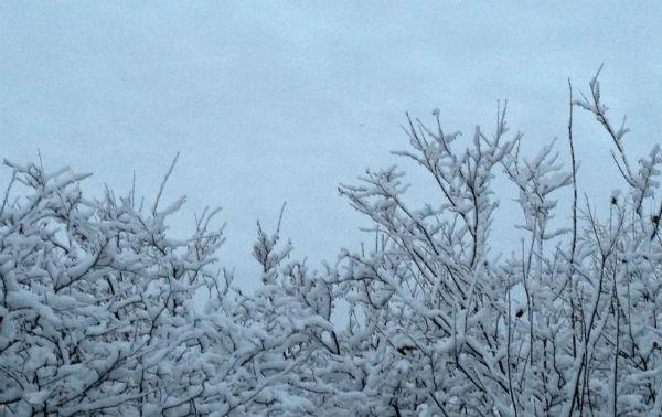 Winter trees Oslo