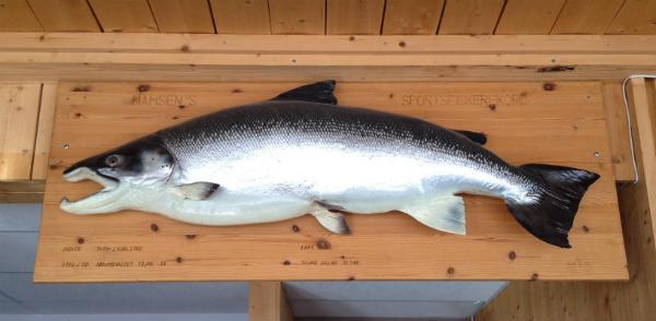 Namsen Salmon