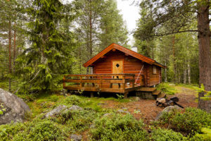 Forest cabin