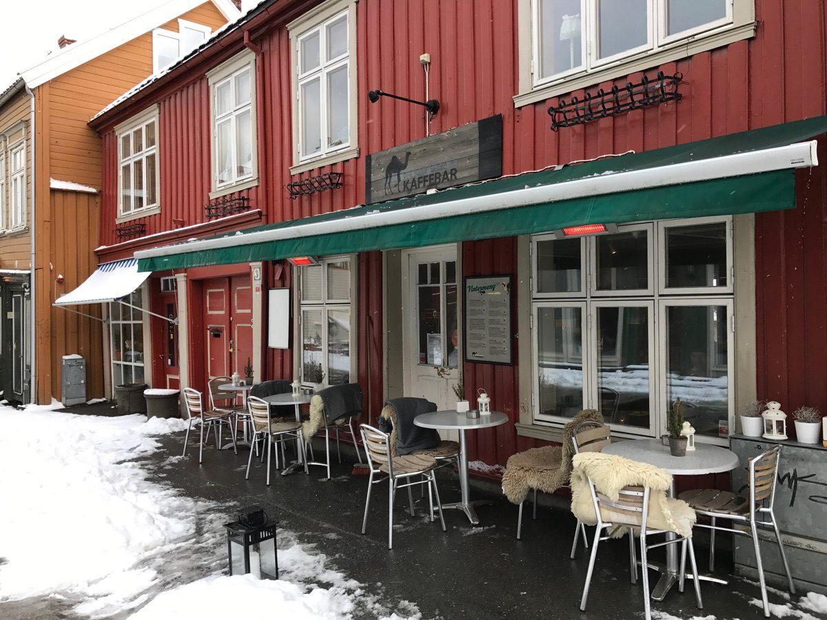 Dromedar Trondheim
