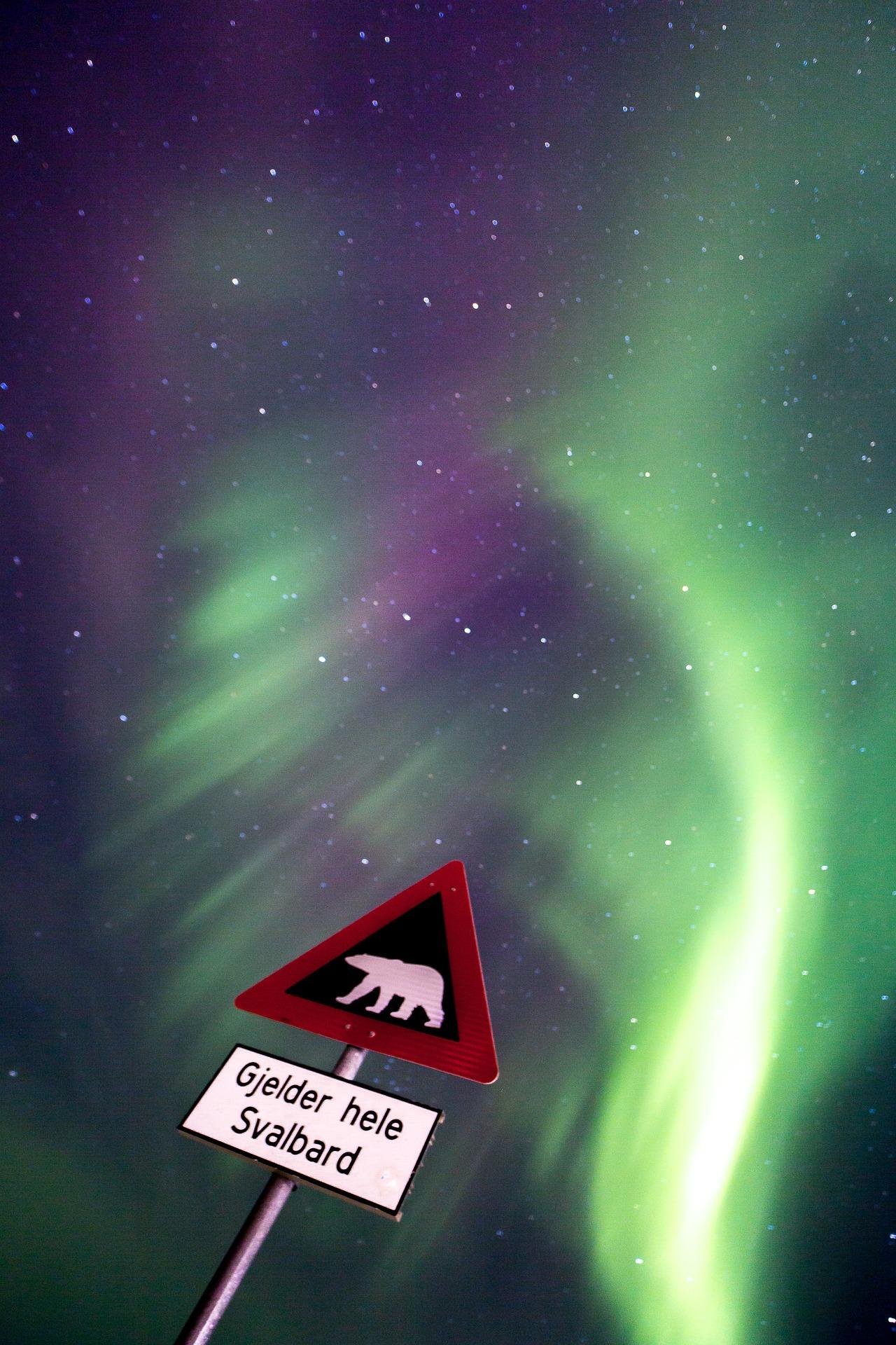 Polar bear warning sign