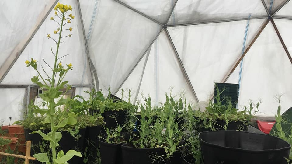 Growing food on Svalbard