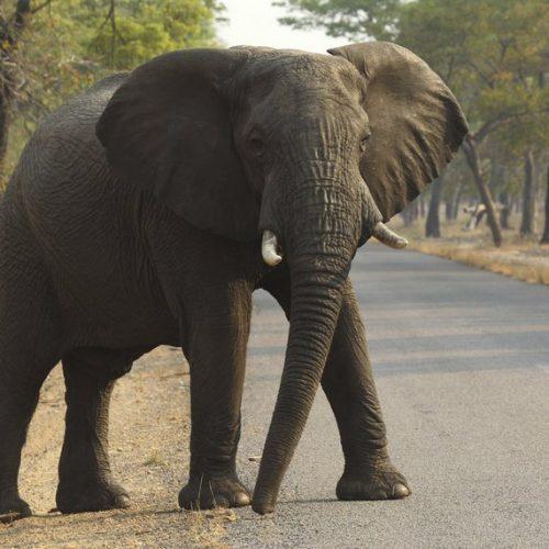 Zim govt officials took $5,000 bribe in illegal elephant hunt; US seeks arrest