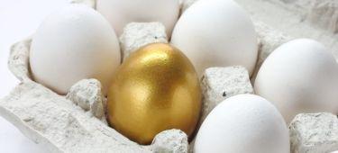powero of attorney eggs