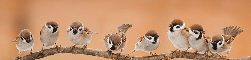 sparrow200
