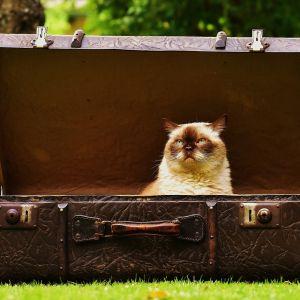 luggage-1643010_1280