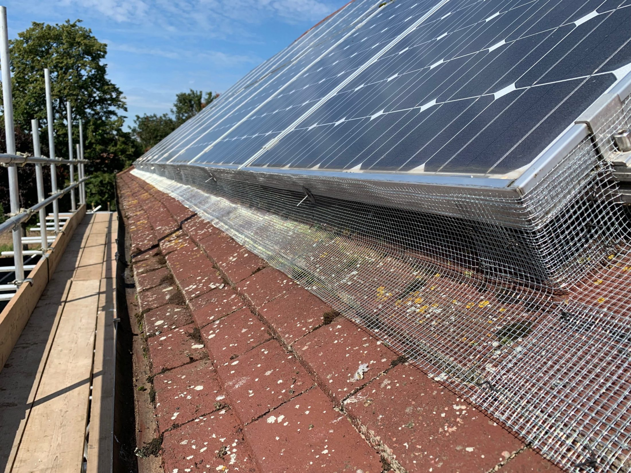 bird proofing roof | Maidstone Rodent, Bird & Insect Removal