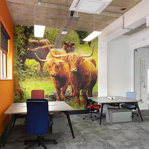Farmison office wall