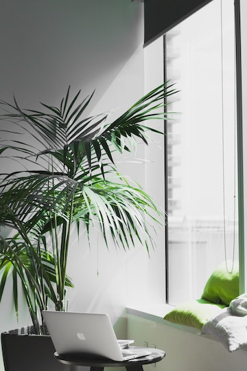 plants and a macbook