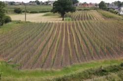Brick Hill Farm, Tree Nursery