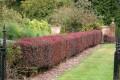 Best low maintenance hedging varieties