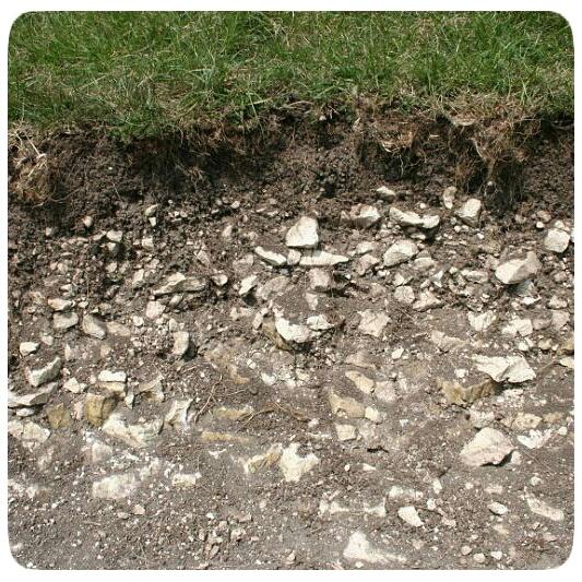 Plants for soil over chalk archives beardsworths for Soil for plants