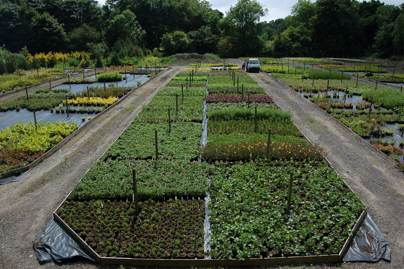 Herbaceous Perennial Bed