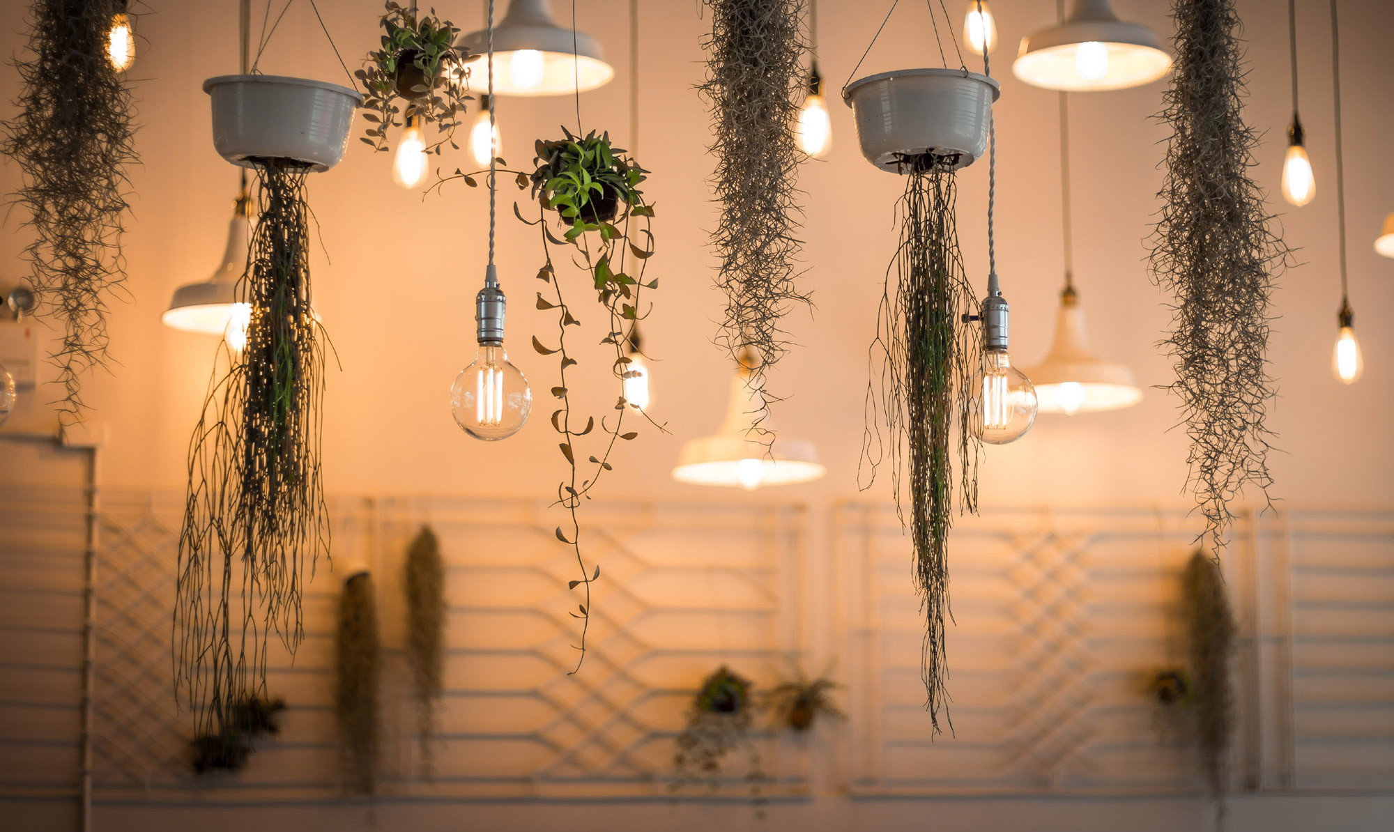Greener lighting solutions. Eco-friendly retail business. British Independent Retailers Association