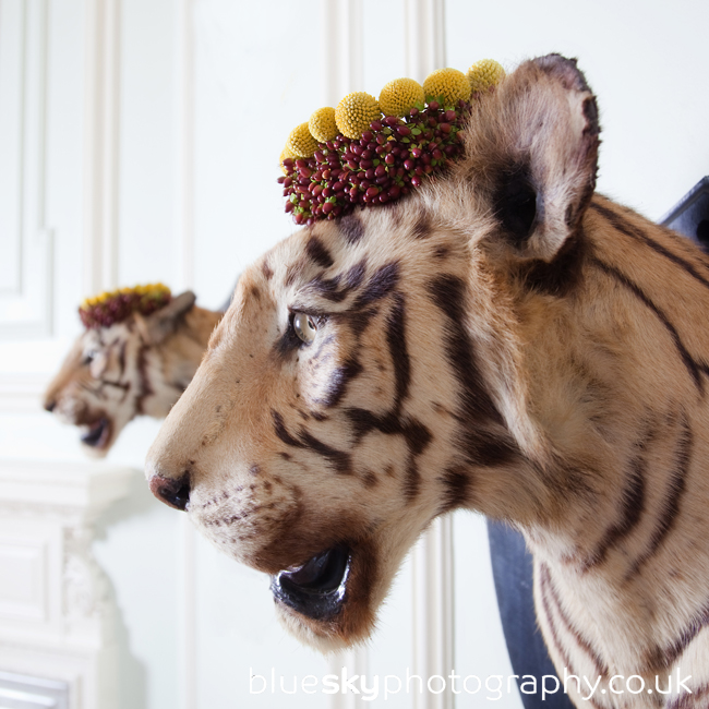 Tigers with crowns at Hopetoun House