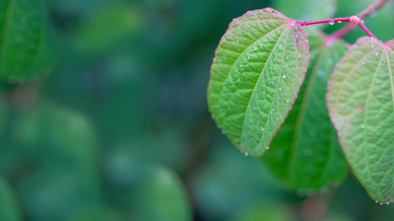 Leaf-copy_3840x2160_acf_cropped