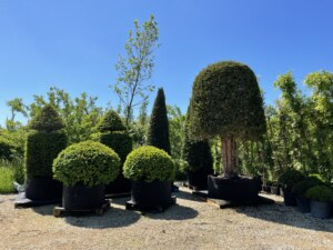form-plants-topiary-hedges-trees