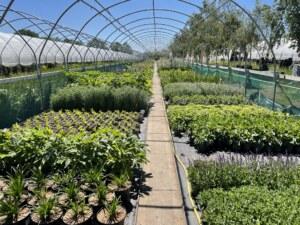 form-plants-perennials