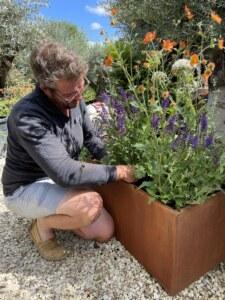 form-plants-trough-planter-perennial-plants
