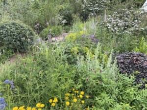 hampton-court-palace-garden-show-festival-form-plants