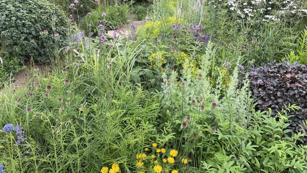 hampton-court-palace-garden-show-festival-form-plants_3840x2160_acf_cropped