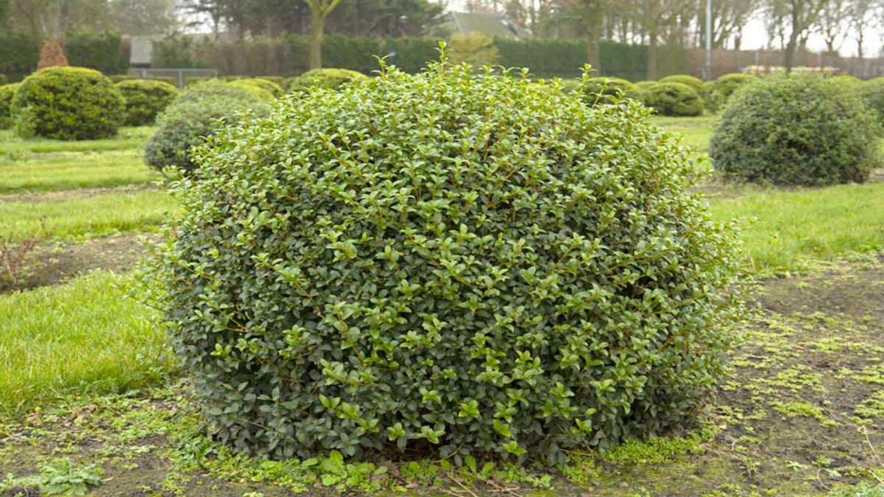 form-plants-topiary_3840x2160_acf_cropped