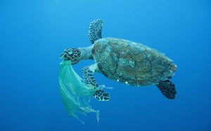 https://s3-eu-west-2.amazonaws.com/cd.darkblue.staging/content/uploads/2020/05/20085330/P6Y9FH_Sea_turtle_swallowing_a_plastic_bag.jpg