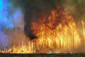 https://s3-eu-west-2.amazonaws.com/cd.darkblue.staging/content/uploads/2020/05/20090311/1280px-Northwest_Crown_Fire_Experiment.png