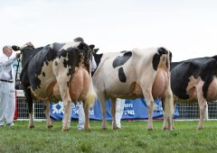 Holstein UK Team selected for European Young Breeders School