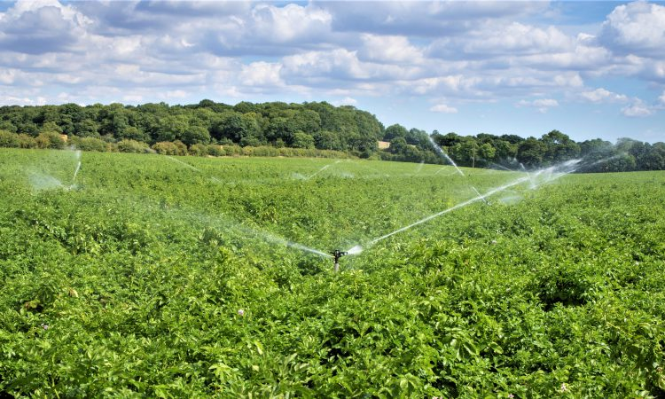 Atlantic circulation collapse could cost British arable sector £346 million a year