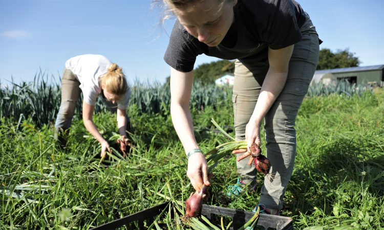 Millennials could 'hold the answer' for horticulture's labour woes