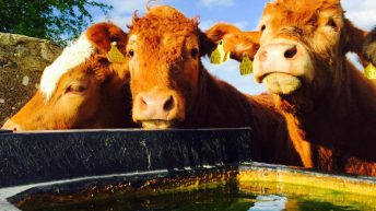 Think you can handle the heat? Here's the latest farm water shortages advice