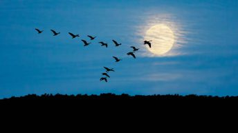 Bird flu: Chief vet stresses importance of biosecurity as third bird tests positive