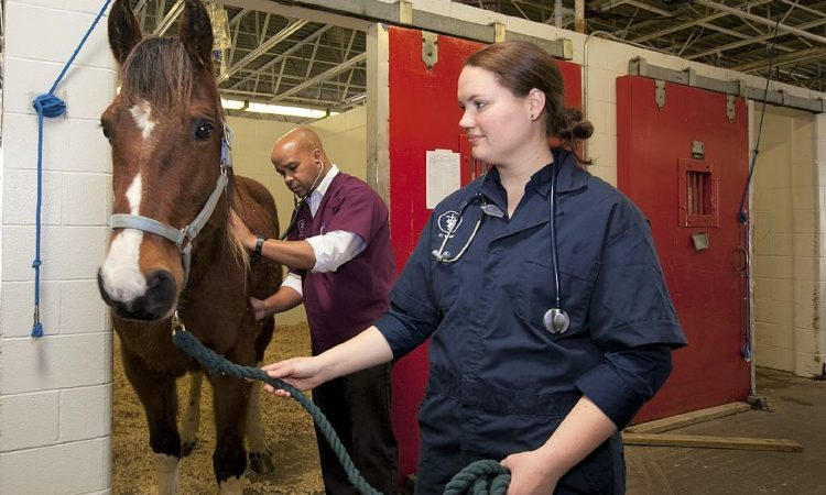 BVA launches first discrimination survey of UK veterinary profession