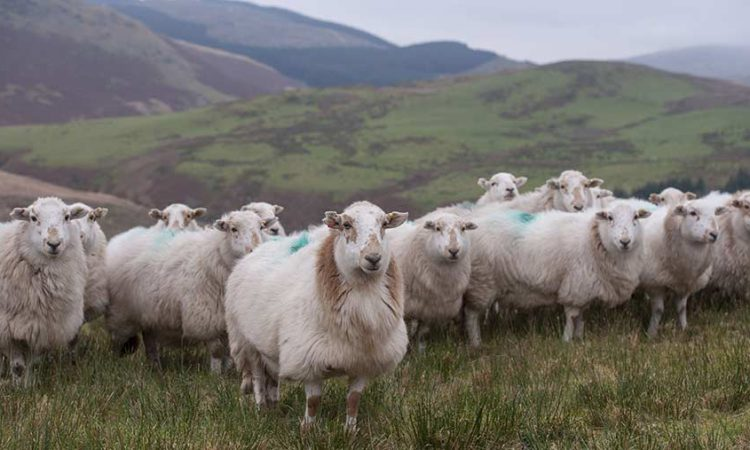 Wales' 2 farming unions unite to outline Brexit vision for agriculture