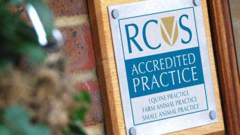 West Midlands vet nurse struck off for misleading greyhound charity