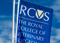 Record number of vets admitted to the RCVS Fellowship this year