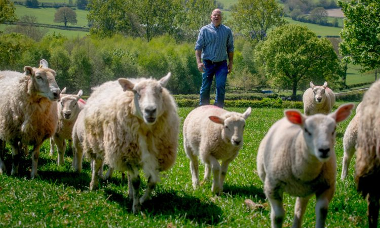 Tesco launches cost of production contracts for its 160 British lamb farmers