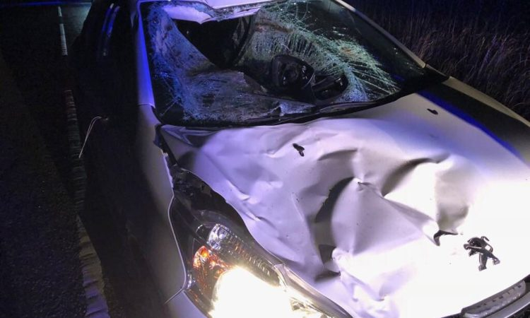 Driver makes lucky escape after 'frightening' smash with cow in Durham