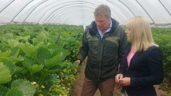 MPs see first-hand 'appalling waste' on Scotland's fields of rotting fruit