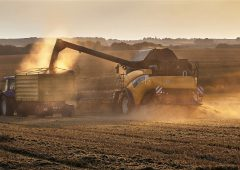 NFU calls for Government policy to manage risks facing oilseed rape production